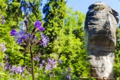 Schließen Sie oben auf blauen Blumen mit erstaunlichem Felsen im Hintergrund Lizenzfreies Stockfoto