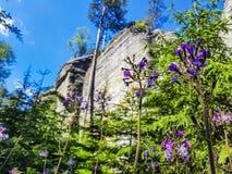 Schließen Sie oben auf blauen Blumen mit erstaunlichem Felsen im Hintergrund Stockbild