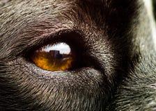 Schließen Sie oben auf dem Auge des Hundes Stockfotografie