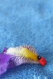 Schließen Sie oben auf dem Marienkäfer, der auf Irisblume auf blauem Hintergrund klettert Lizenzfreie Stockfotografie