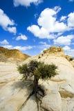 Schließen Sie oben auf den Felsen mit einem kleinen Baum stockfoto