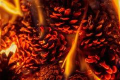 Schließen Sie oben auf einem Feuer mit Kiefernkegeln Stockfoto