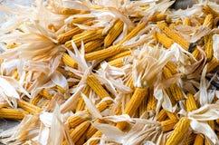 Schließen Sie oben auf einem großen Stapel von organischen frischen Maiskolben. Stockbilder