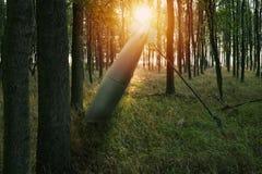 Schließen Sie oben auf Fehlzündung oder nicht detoniert Bombe im Wald stockfoto