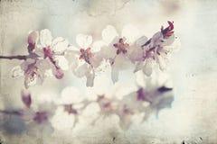 Schließen Sie oben auf Frühlingsblüte mit Weichzeichnung - altes Foto Stockfotografie