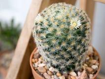 Schließen Sie oben auf Kaktus Lizenzfreies Stockfoto