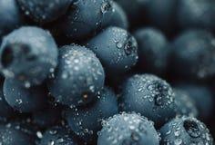 Schließen Sie oben, Beeren der dunklen Weintraube mit Wassertropfen des Restlichts auf schwarzem Hintergrund Lizenzfreies Stockfoto