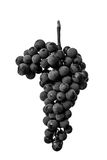 Schließen Sie oben, Beeren der dunklen Weintraube mit Wassertropfen des Tiefs Lizenzfreie Stockfotografie
