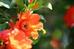 Schließen Sie oben in den portugiesischen Gartenblumen Lizenzfreie Stockfotos