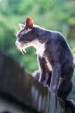 Schließen Sie oben für eine Katze, die auf der Wand und dem grünen Hintergrund sitzt Stockfotografie