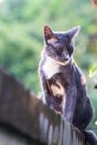 Schließen Sie oben für eine Katze, die auf der Wand und dem grünen Hintergrund sitzt Stockbild