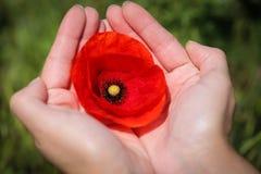 Schließen Sie oben mit den Händen, die eine Mohnblume halten Lizenzfreies Stockfoto
