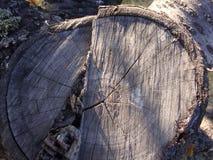Schließen Sie oben mit einem Weitwinkel eines alten toten Baumstumpfes, der bis zum vielen Jahren abgefressen wird stockfotos