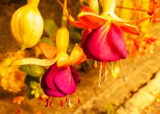 Schließen Sie oben und leicht Weinlese zu den schönen kleinen gelben und roten Blumen stockfotografie