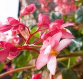 Schließen Sie oben und leicht zu den schönen kleinen Rosa-, Purpurroten und Rotenblumen lizenzfreie stockfotografie