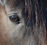 Schließen Sie oben vom Auge des Pferds Lizenzfreies Stockbild