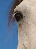 Schließen Sie oben vom Auge eines Pferds Lizenzfreie Stockbilder