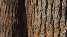 Schließen Sie oben vom Baumstamm und von seiner strukturierten Barke stockfoto