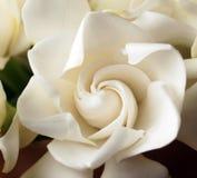 Schließen Sie oben vom Blütenstaub der Blume Lizenzfreie Stockfotografie