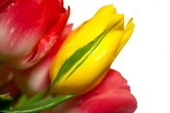 Schließen Sie oben vom Blumenstrauß der rosafarbenen und gelben Tulpen Stockbilder