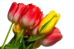 Schließen Sie oben vom Blumenstrauß der rosafarbenen und gelben Tulpen Lizenzfreie Stockfotos