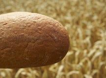 Schließen Sie oben vom Brot vor Getreidefeld Stockfoto