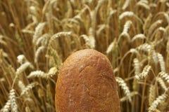 Schließen Sie oben vom Brot vor Getreidefeld Lizenzfreie Stockbilder