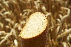 Schließen Sie oben vom Brot vor Getreidefeld Stockfotos