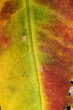 Schließen Sie oben vom bunten Herbstblatt Stockfoto