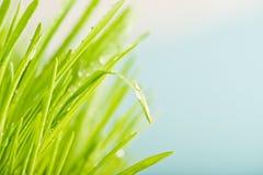 Schließen Sie oben vom frischen grünen Gras der Natur Stockfotos