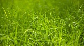 Schließen Sie oben vom frischen Gras Lizenzfreies Stockfoto