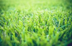 Schließen Sie oben vom frischen starken Gras Stockfotografie