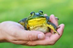 Schließen Sie oben vom Frosch in einer Hand Stockfotografie