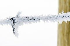 Schließen Sie oben vom Frost, der auf barbwire wächst Stockfotografie