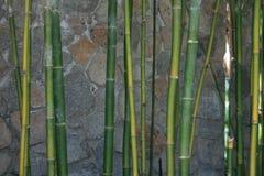 Schließen Sie oben vom grünen Bambus Stockbild