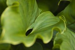 Schließen Sie oben vom grünen Blatt stockbilder