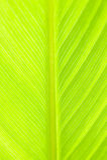 Schließen Sie oben vom grünen Blatt Stockfotografie