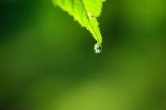 Schließen Sie oben vom grünen Blatt mit Wassertropfen Stockfotos
