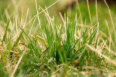 Schließen Sie oben vom grünen Gras Lizenzfreie Stockfotos