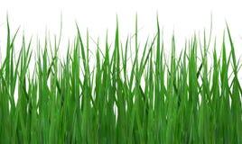 Schließen Sie oben vom grünen Gras Stockbild