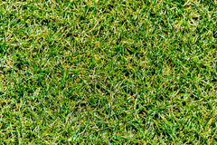 Schließen Sie oben vom grünen Gras für Ihren Hintergrund Lizenzfreies Stockbild