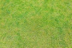 Schließen Sie oben vom grünen Gras für Ihren Hintergrund Stockbild