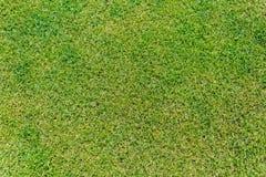 Schließen Sie oben vom grünen Gras für Ihren Hintergrund Stockfotografie