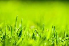 Schließen Sie oben vom grünen Gras mit Fokuspunkt. Stockfotos