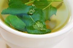 Schließen Sie oben vom grünen Tee Lizenzfreies Stockbild