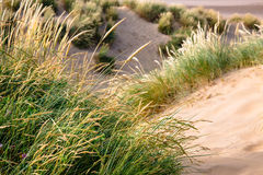 Schließen Sie oben vom Gras auf Sanddünen - krümmen Sie Sande, England Lizenzfreies Stockfoto