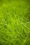 Schließen Sie oben vom Gras im Park Stockbilder