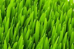 Schließen Sie oben vom Gras am Sommertag Stockfoto