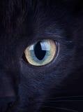 Schließen Sie oben vom intensiven Auge einer schwarzen Katze Lizenzfreies Stockfoto