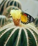Schließen Sie oben vom Kaktus. stockfotos